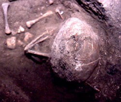 photo of burial 205
